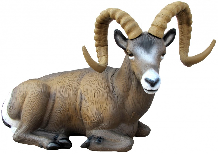 Bilde av SRT Rocky Mountain Sheep